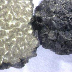 Cette image a été créée par l'utilisateur James Baker (cepecity) dans Mushroom Observer, une source d'images mycologiques.Vous pouvez contacter cet utilisateur iici.English| español| français| italiano| македонски| മലയാളം| português| +/− / CC BY-SA (https://creativecommons.org/licenses/by-sa/3.0)