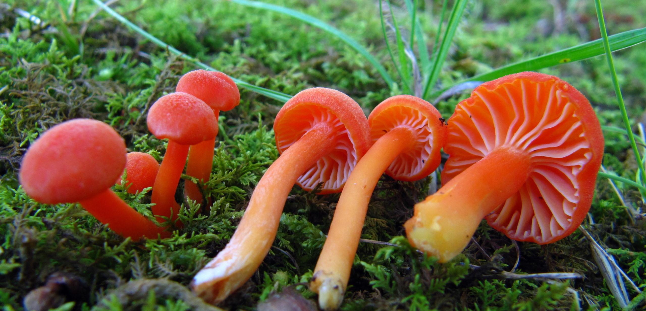 identifier-les-champignons.com