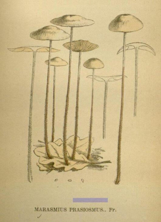 Gillet, Claude Casimir, 1874 via archive.org